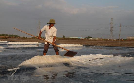 Diêm dân ĐBSCL trúng mùa muối mới