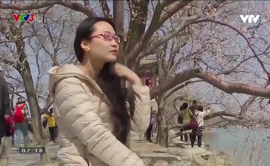 Cuộc sống trở lại tại Trung Quốc: Công viên mở cửa, người dân đi ngắm hoa anh đào