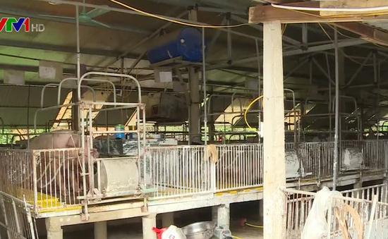 Trang trại lợn xả thải giữa khu dân cư tại Hà Tĩnh, gây ô nhiễm nghiêm trọng