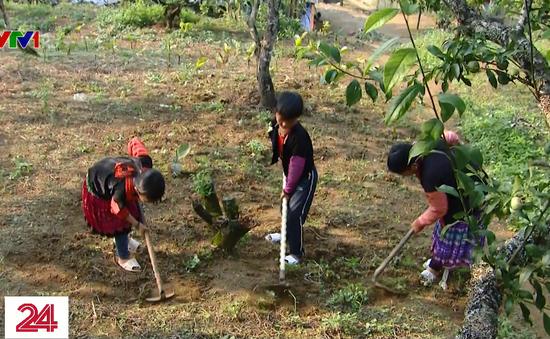 Học sinh vùng cao Sơn La nghỉ học mưu sinh vì dịch bệnh