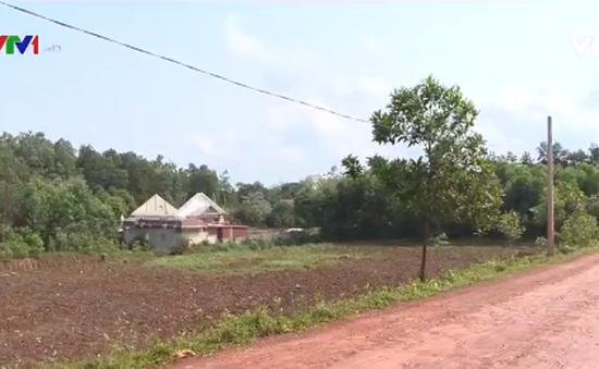 """Triệu Sơn (Thanh Hóa): Hàng nghìn m2 đất bị """"đất tặc"""" cày xới"""