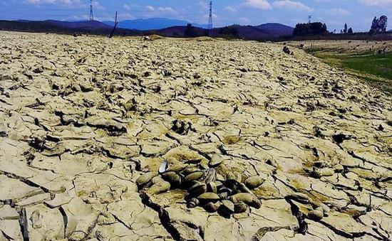 Hạn hán tại Nam Trung Bộ khả năng kéo dài đến tháng 8