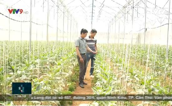 Nhiều nhà vườn Đà Lạt thu lợi nhờ chủ động kế hoạch sản xuất