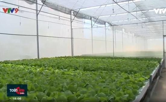 TP.HCM: Người dân làm giàu từ chính sách phát triển nông nghiệp đô thị