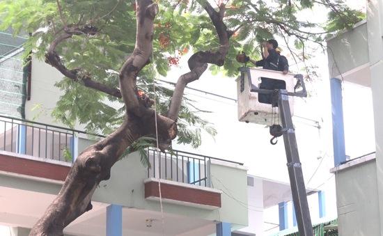 """Đốn bỏ cây phượng """"biểu tượng"""" còn lại ở trường THCS Bạch Đằng, học sinh đi học trở lại bình thường"""