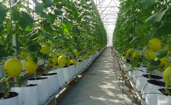 Hà Nội kêu gọi đầu tư vào 11 dự án thuộc lĩnh vực nông nghiệp
