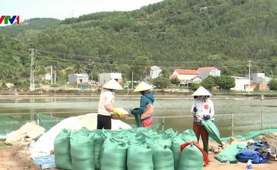 Diêm dân Quảng Ngãi gặp khó khăn do giá muối thấp
