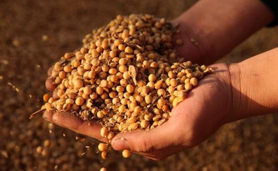 Trung Quốc hạn chế nhập khẩu nông sản Mỹ