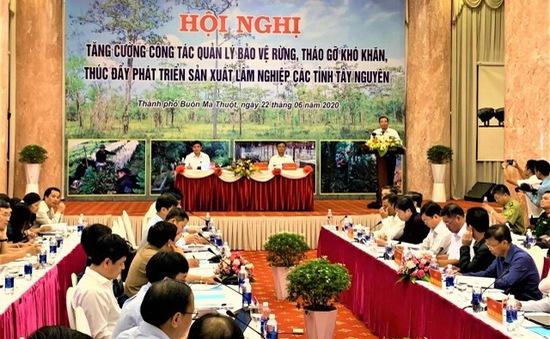 Tăng cường phát triển, bảo vệ rừng Tây Nguyên