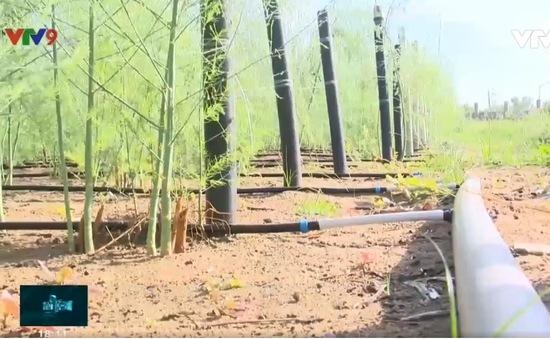 """Ninh Thuận: Tiết kiệm nước """"giải cứu"""" cho vùng đất khô hạn"""