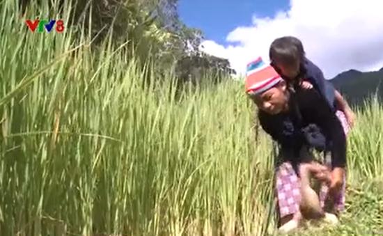 Gần 19 nghìn hộ đồng bào dân tộc thiểu số tại Kon Tum thoát nghèo