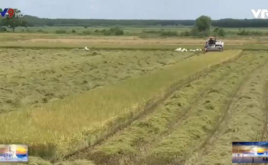 Bình Thuận: Liên kết bền vững trồng lúa chất lượng cao.