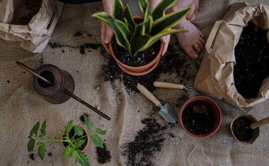 Cách cực đơn giản để có mảnh vườn nhỏ trong nhà