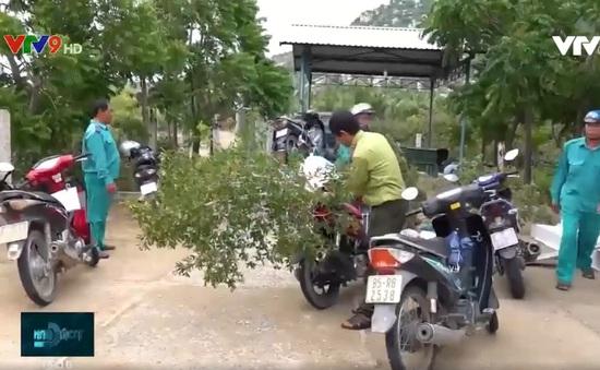 Ninh Thuận: Báo động nạn phá rừng săn cây cảnh