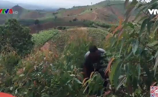 Kon Tum: Người dân đồng thuận chủ trương tái tạo rừng