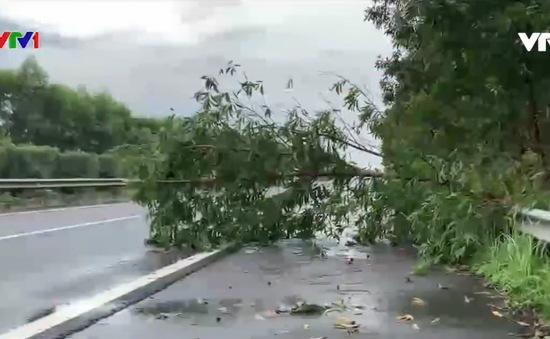 Hiểm họa từ cây gãy đổ trên cao tốc