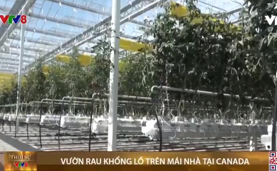 Canada khai trương vườn rau khổng lồ trên mái nhà