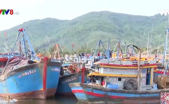 Đà Nẵng, Quảng Nam, Thừa Thiên - Huế kêu gọi tàu thuyền tránh bão số 5