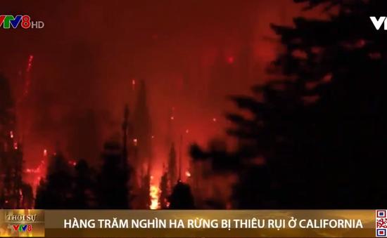 Hàng trăm nghìn ha rừng bị thiêu rụi ở California