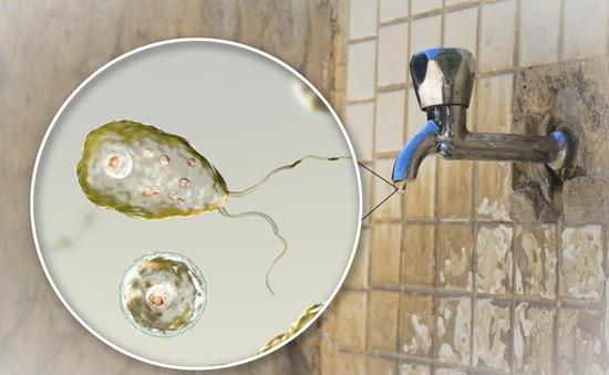 Mỹ cảnh báo nước máy tại các khu dân cư nhiễm vi khuẩn ăn não