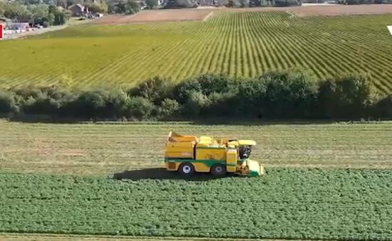 Nông dân Bỉ chuyển dần sang canh tác hữu cơ