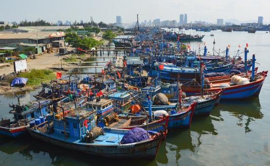 """Vì sao Việt Nam vẫn chưa thể gỡ """"thẻ vàng"""" cho thủy sản?"""