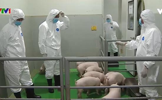 Đến quý II/2021, sẽ có vaccine ngừa dịch tả lợn châu Phi