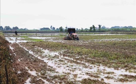 Kiểm tra phòng chống hạn mặn và sản xuất vụ Đông Xuân