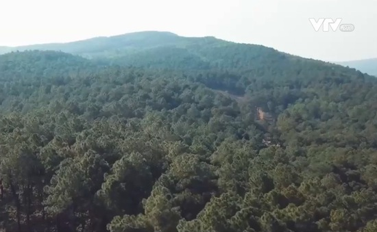 Lợi ích kép từ áp dụng chỉ số môi trường rừng