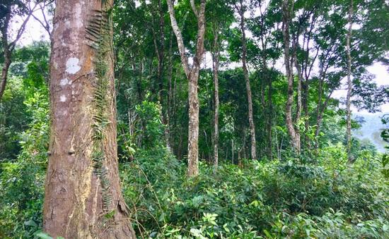 Việt Nam có thể bán 57 triệu tín chỉ carbon ra thế giới mỗi năm