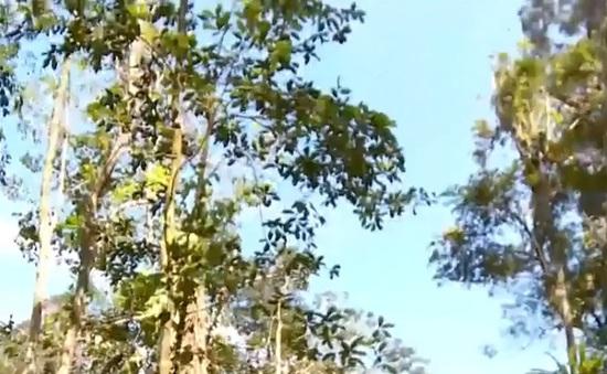 Khánh Hòa tăng cường lực lượng bảo vệ rừng tại các điểm nóng trong dịp Tết