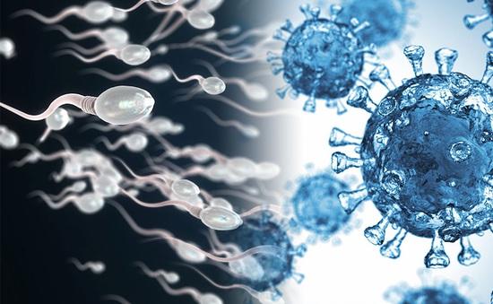 COVID-19 có gây vô sinh cho nam giới hay không?