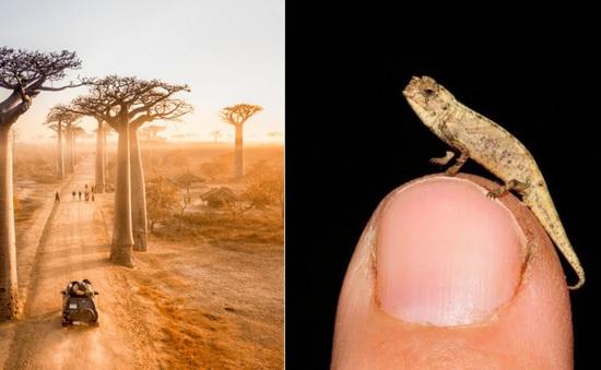 Phát hiện loài bò sát có kích thước nhỏ nhất thế giới