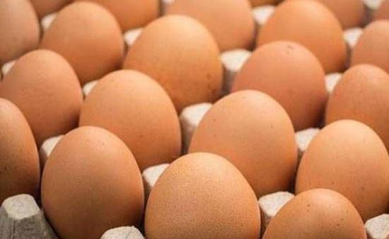 Malaysia kiểm tra trang trại trứng để xác định nguồn lây vi khuẩn Salmonella