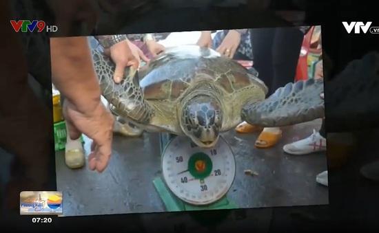 Bến Tre thả rùa biển do người dân giao nộp