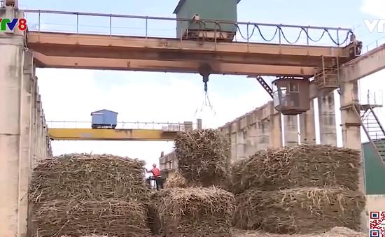 Liên kết sản xuất nông nghiệp, nông dân yên tâm hơn