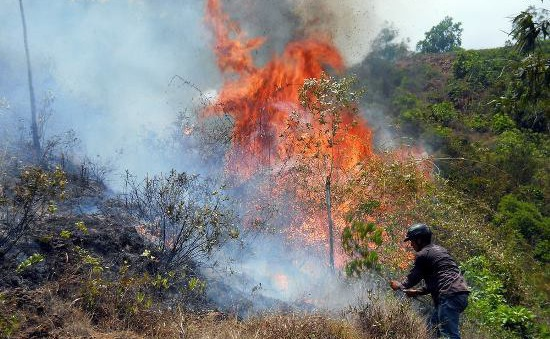 Trung Bộ đề phòng hỏa hoạn, cháy rừng do nắng nóng