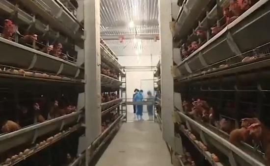 Đầu tư công nghệ trong chăn nuôi giúp kéo giảm chi phí sản xuất