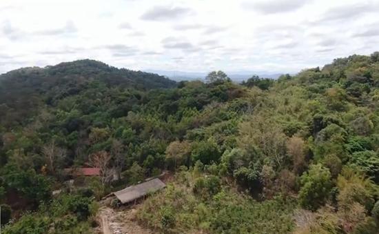 Nan giải bài toán trồng lại rừng vẫn đảm bảo môi trường và kinh tế
