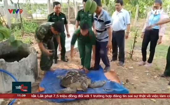 Đồn Biên phòng Cửa Đại – Bến Tre thả rùa biển về tự nhiên