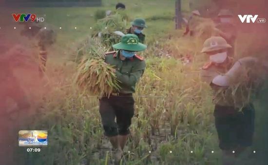 Công an gặt lúa giúp dân vì phải cách ly do Covid-19