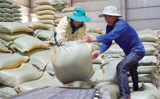 Gạo Việt và cơ hội lớn tại Philippines
