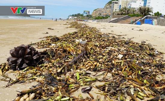 100 tấn rác tràn vào bãi biển Vũng Tàu