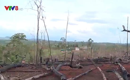 Đắk Nông: Nóng tình trạng phá rừng để chiếm đất sản xuất