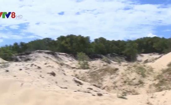 Vịnh Lăng Cô tiếp tục bi xâm hại do khai thác đất cát trái phép