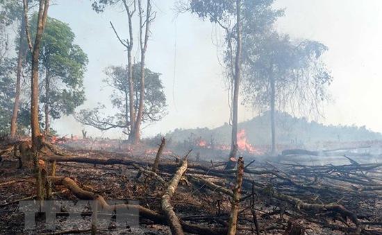 Cảnh báo cháy rừng ở mức cao nhất do nắng nóng