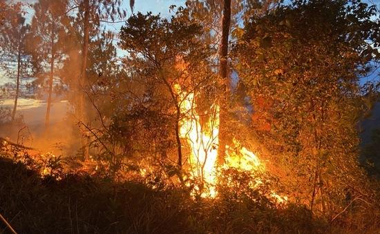 Cháy rừng thông phòng hộ gần 30 năm tuổi tại Thừa Thiên-Huế