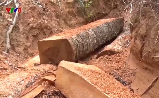 Rừng giao cho địa phương quản lý liên tục bị xâm hại