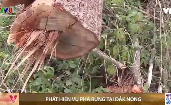 Đắk Nông: Phát hiện vụ phá gần 7000m2 rừng