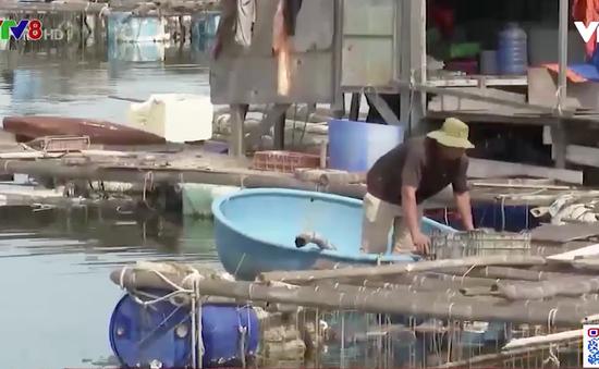 Kiến nghị lùi thời hạn tháo dỡ lồng bè cảng cá Thọ Quang
